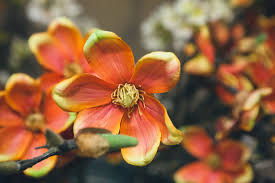 floral rosegate design birmingham alabama al interior