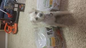 freshpet freshpet select fresh from the kitchen home cooked