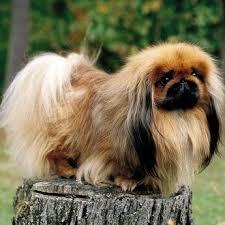 89 best popular pet dog breeds images on pinterest pet dogs