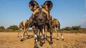 safari africa on safari u0027 photographer tips cnn travel