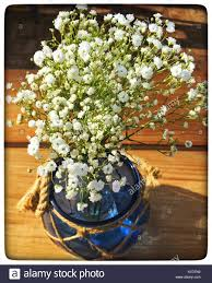 Baby S Breath Flower Baby U0027s Breath Flowers In A Blue Case Stock Photo Royalty Free