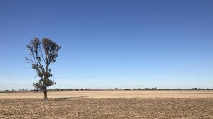 vegetation laws killing the iconic paddock tree the