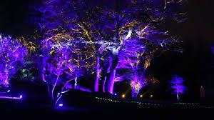 tree lights at the morton arboretum morton arboretum s symphony woods chicago tribune