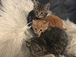 beautiful kittens ready now in merthyr tydfil gumtree