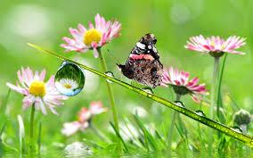download wallpaper 3840x2400 stem drops flowers butterfly ultra