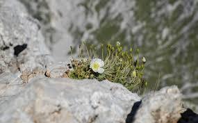 Blumen Bade Kurzurlaub Im Steinernen Meer Das Ingolstädter Haus