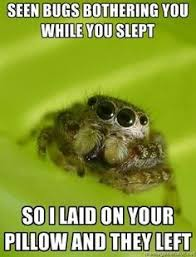 Sad Spider Meme - the sad world of the misunderstood house spider spider meme