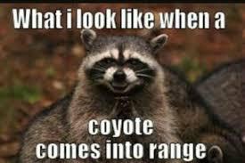 Hunting Meme - hunting memes home facebook