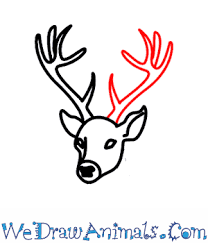 how to draw a deer head step by step the best deer 2017