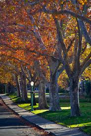 anthony dunn photography fall colors sacramento
