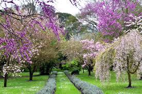 file spring in ninfa garden jpg wikimedia commons