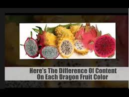 amazing dragon fruit cure cancer color dragon