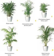 indoor plants nz rent or buy palms cycads other plants from ambius
