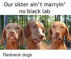 Black Lab Meme - our sister ain t marryin no black lab dogs meme on me me
