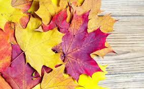 imagenes de otoño para fondo de escritorio los árboles del otoño naturaleza paisaje hoja hojas fotos para el