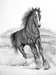 tutorial how to draw a horse