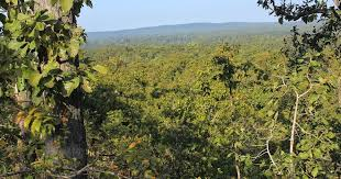 forest images Marginal increase in india 39 s forest cover is masking massive jpg