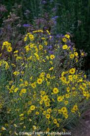 131 best great plants for socal gardens images on pinterest
