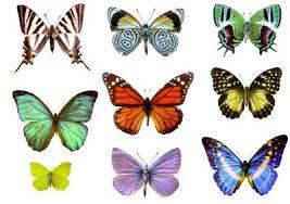 copy of butterflies moths lessons tes teach