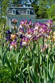 Family Gardens Presby Memorial Iris Gardens Commemorate 90 Years The Montclair