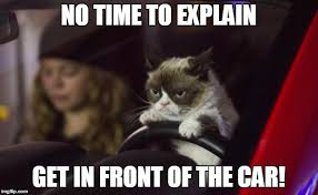 Grumpy Cat Meme No - grumpy cat driving imgflip