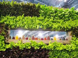 how to grow lettuce u0026 leafy green veggies this fall indoors
