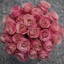 roses wholesale pink study with amato wholesale flirty fleurs the florist