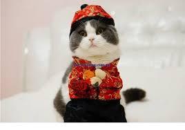 costume new year cat new year costume luvurcats