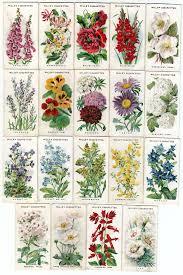 flower garden ideas country photogiraffe me