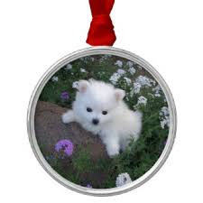 american eskimo dog nz american eskimo dog christmas tree decorations u0026 ornaments