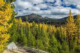 Oregon scenery images Fall in oregon oregon fall foliage jpg