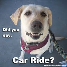 Dog In Car Meme - how to prep your dog for a long road trip pet auto safety