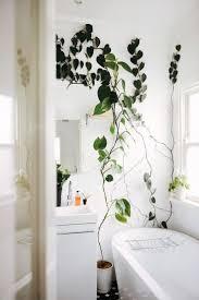 bathroom simple stunning plants in bathroom green bathrooms