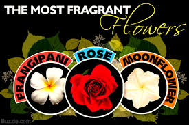Fragrant Plants List 18 Fragrant Flowers To Plant In Your Garden And Calm Your Nerves