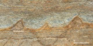 evidence of life in earth u0027s oldest rocks nature