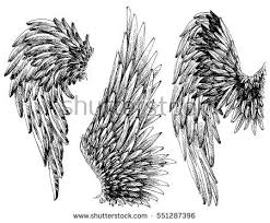 wings stock images royalty free images u0026 vectors shutterstock