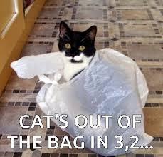 Soon Cat Meme - great cats be funny blog internet cat memes