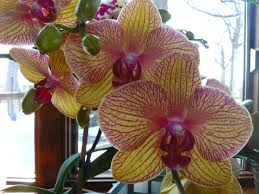 Most Fragrant Indoor Plants Top 10 Tropical House Plants Any One Can Grow The Self