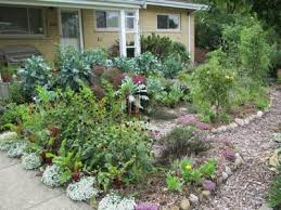 Permaculture Paradise - Backyard permaculture design