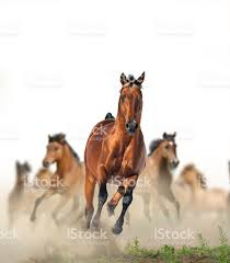 mustang horse running horses running in the dust stock photo 482000398 istock