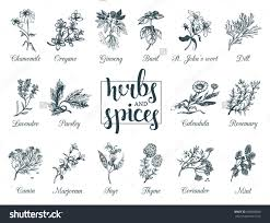native american healing plants herbs and spices set hand drawn officinale medicinal plants