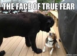 Fear Meme - true fear meme
