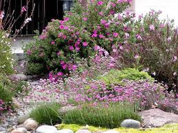 california native plants mix with other drought tolerant