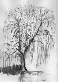 willow tree tattoo designs knowles art tree weeping willow hawk