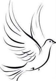 best 25 dove sketches ideas on pinterest cameron canada dove