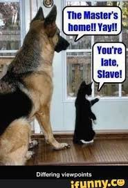Best Dog Memes - best 50 funny cat vs dog memes images to prove who s boss