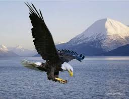 stellers sea eagle wallpapers best 25 eagle images ideas on pinterest eagle pictures bald