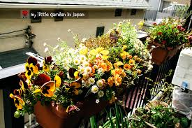 my little garden in japan long time no see