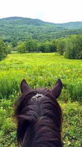 Vermont travel articles images Equestrian travel articles riding icelandic horses in vermont jpg