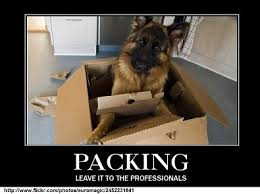 Moving Meme Pictures - image result for cats and moving real estate moving pinterest